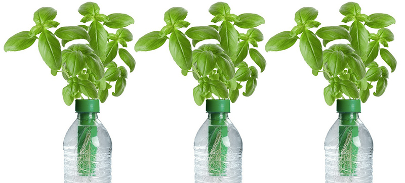 Seed: the Smartest Bottle Ever